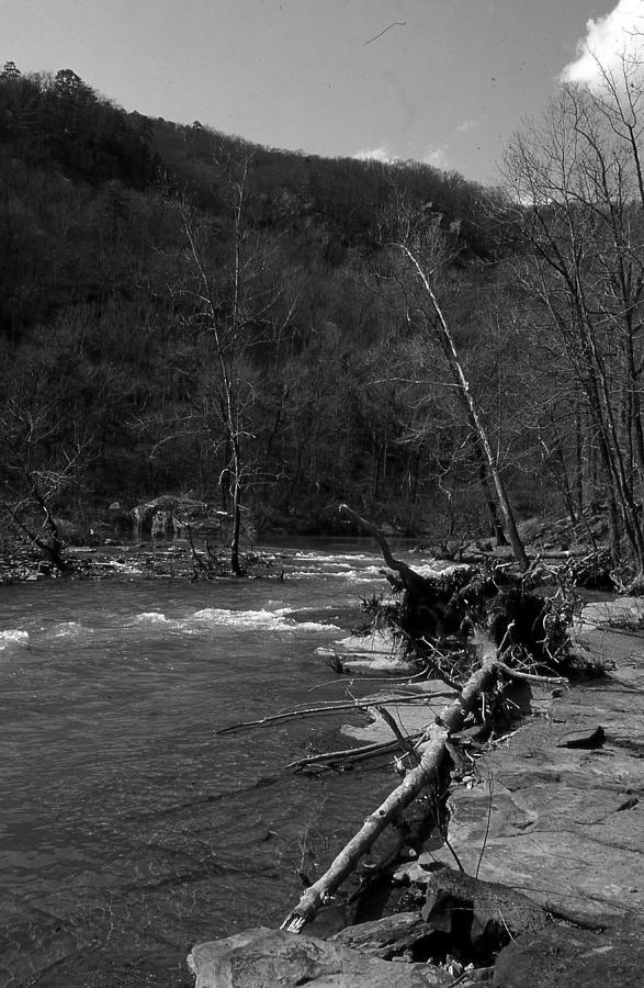 Long-pool-log-jam Photograph by Curtis J Neeley Jr