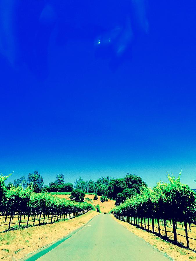 Vineyards Photograph - Long Road by Gillis Cone