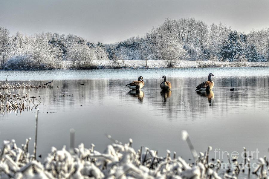 Geese at Long Run Pond by Katie Joya
