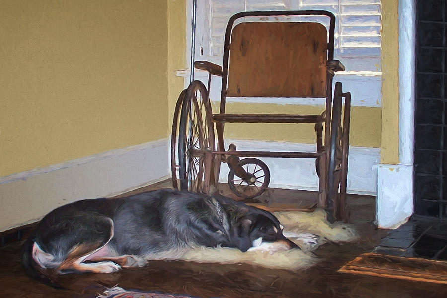 Dog Photograph - Long Wait - Dog - Wheelchair by Nikolyn McDonald