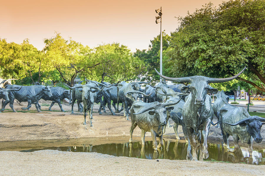 Dallas Photograph - Longhorn Cattle Sculpture In Pioneer Plaza, Dallas Tx by Art Spectrum