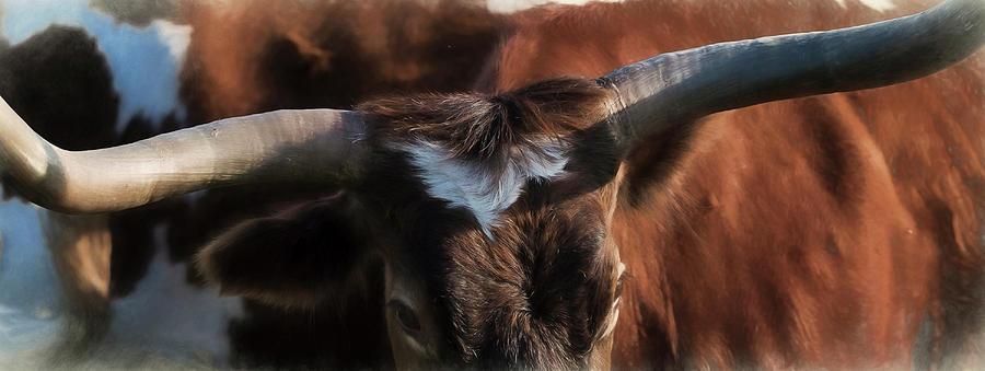 Longhorns Photograph - Longhorn by Pamela Steege
