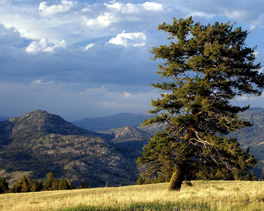 Yellowstone National Park Photograph - Lonly Tree by Marty Koch