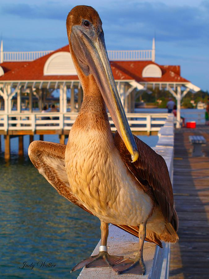 Birds Photograph - Look At Me by Judy  Waller