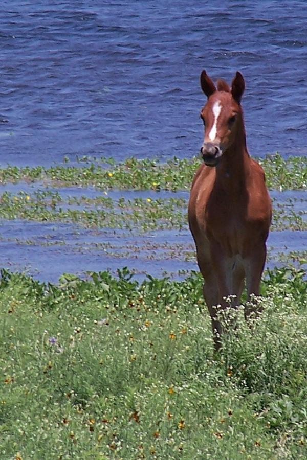 Horse Photograph - Look At Me by Lilly King