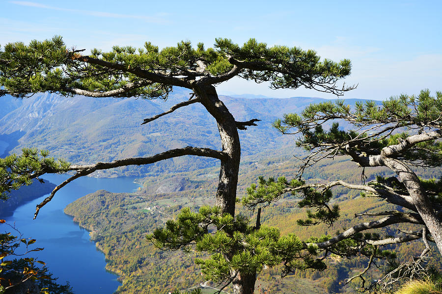 Lake Photograph - Look At The Pine Trees And The Lake by Predrag Lukic