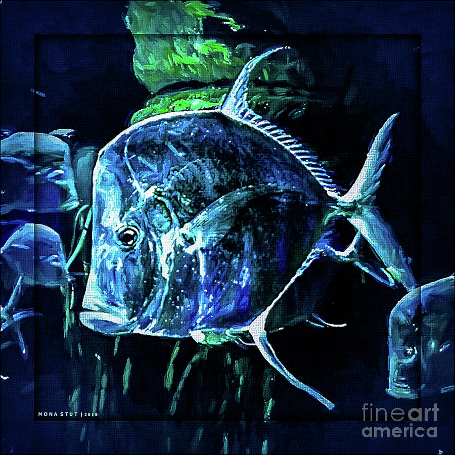 Look Down Angle Fishes Digital Art