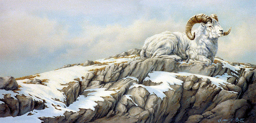 Dall Sheep Painting - Look Of  Defiance by Kathleen  V  Butts