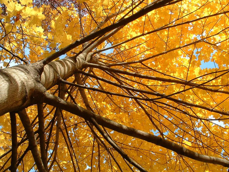 Tree Photograph - Look On The Bright Side  by Andrea  Darlington