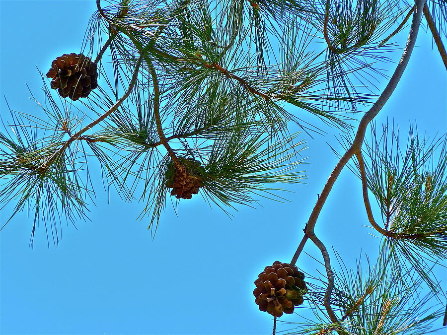 Trees Photograph - Look Up by Diana Hatcher