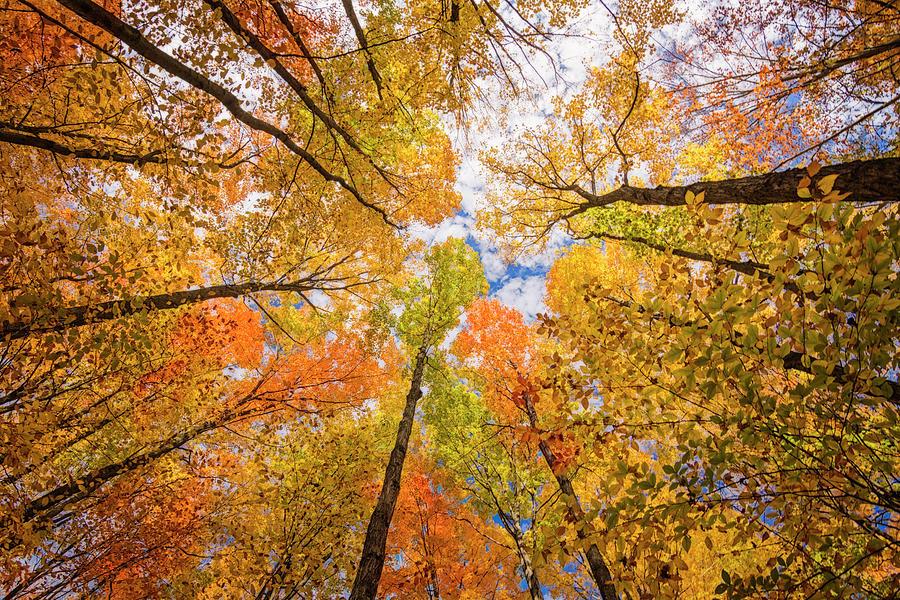 Fall Photograph - Look Up by Peg Runyan