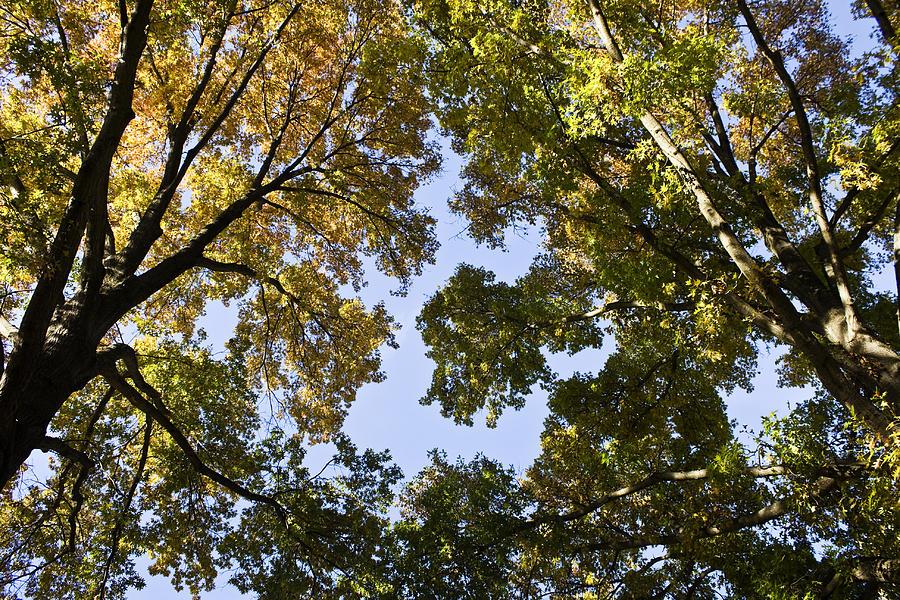 Fall Photograph - Look Up  by Teresa Mucha