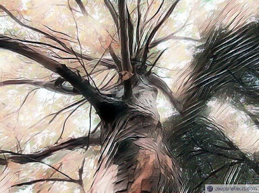Digitalart Photograph - Lookin Up The Tree #digitalart by Michal Dunaj