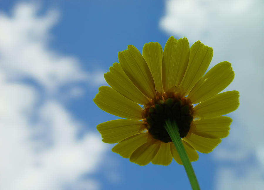 Flower Photograph - Looking At The Sky by Ilias Kordelakos
