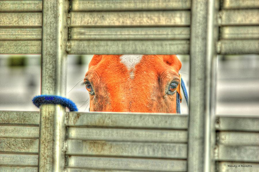 Horse Photograph - Looking At You by Randy Ricketts