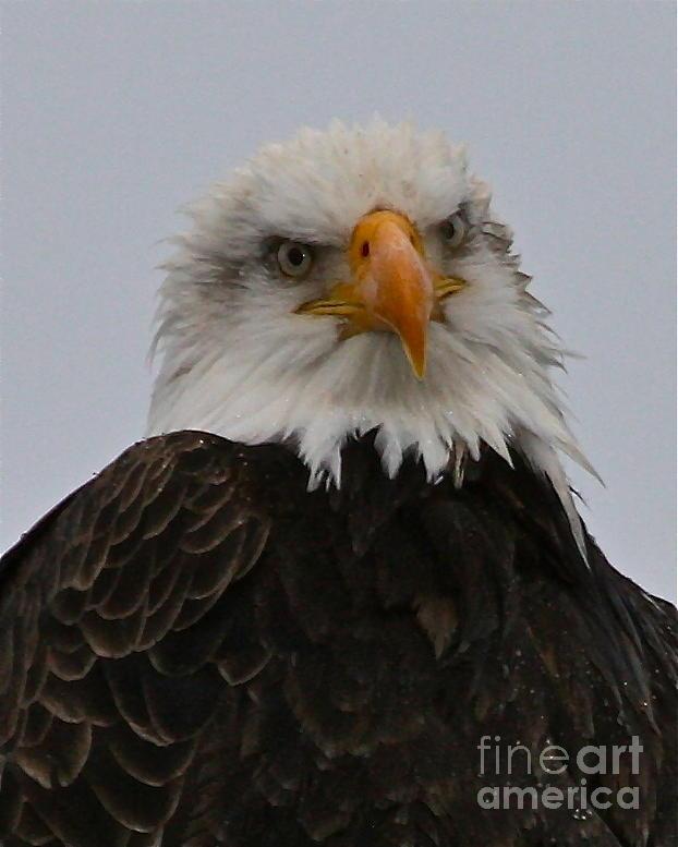 Eagle Photograph - Looking At You by Rick  Monyahan