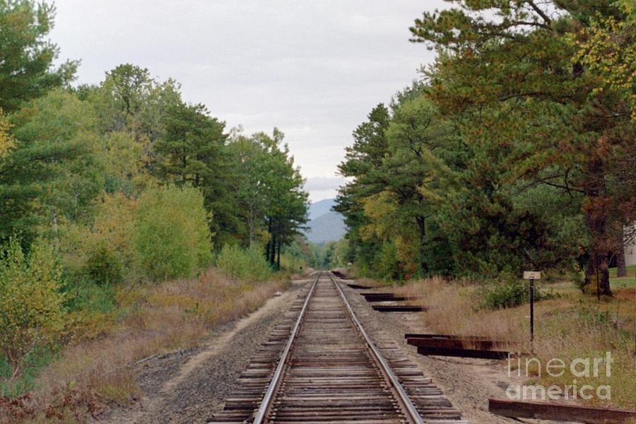 Tracks Photograph - Looking Away by Kathy Bradley