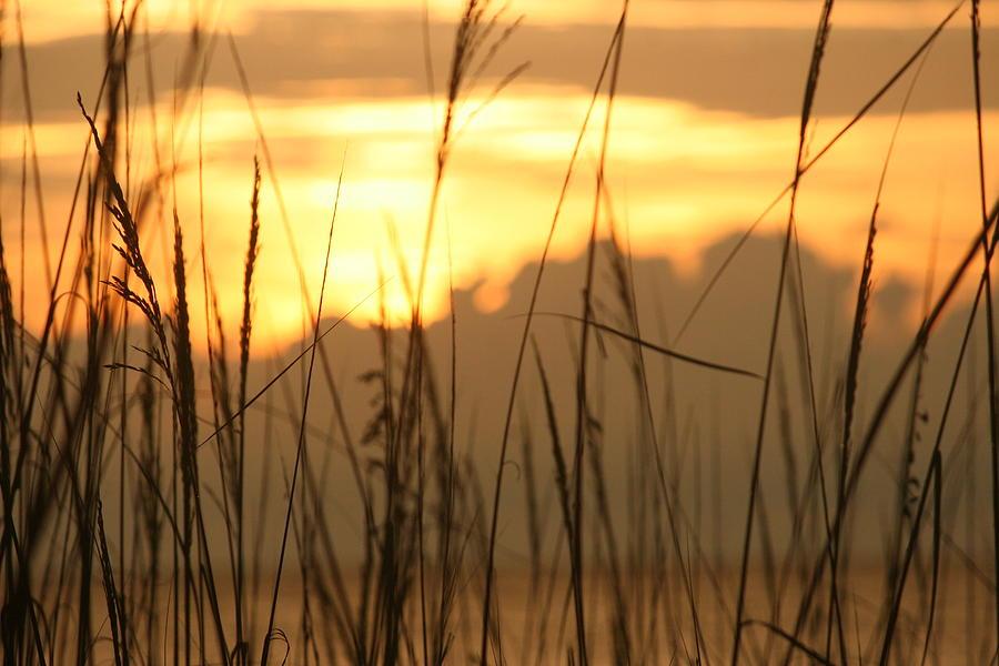Beach Photograph - Looking Beyond by Morgann Hext