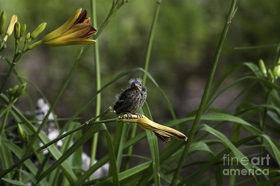 Baby Bird Photograph - Looking For A Friend 2 by E Mac MacKay