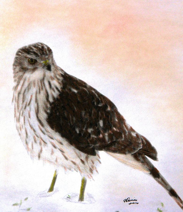 Hawks Drawing - Looking For Breakfast by Angela Davies