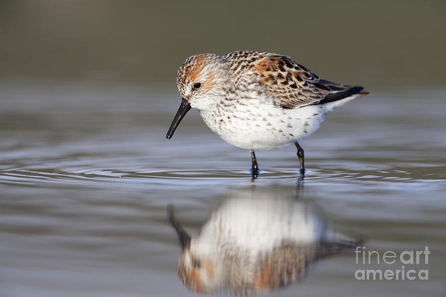 Bird Photograph - Looking For Breakfast by Tim Grams