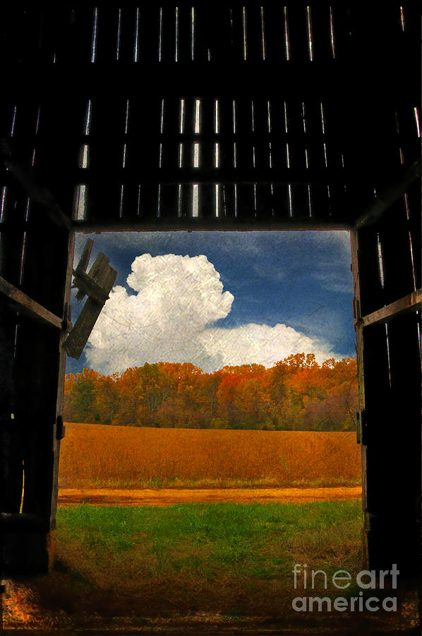 Farm Photograph - Looking Out by Lois Bryan