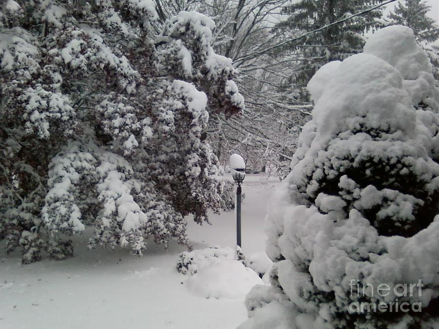 First Snow Photograph - Looking Out My Front Door by Carol Wisniewski