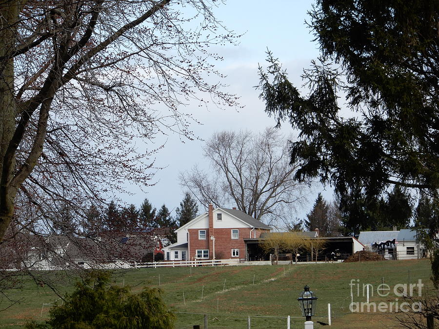 Amish Photograph - Looking Out Over The Horse Farm by Christine Clark
