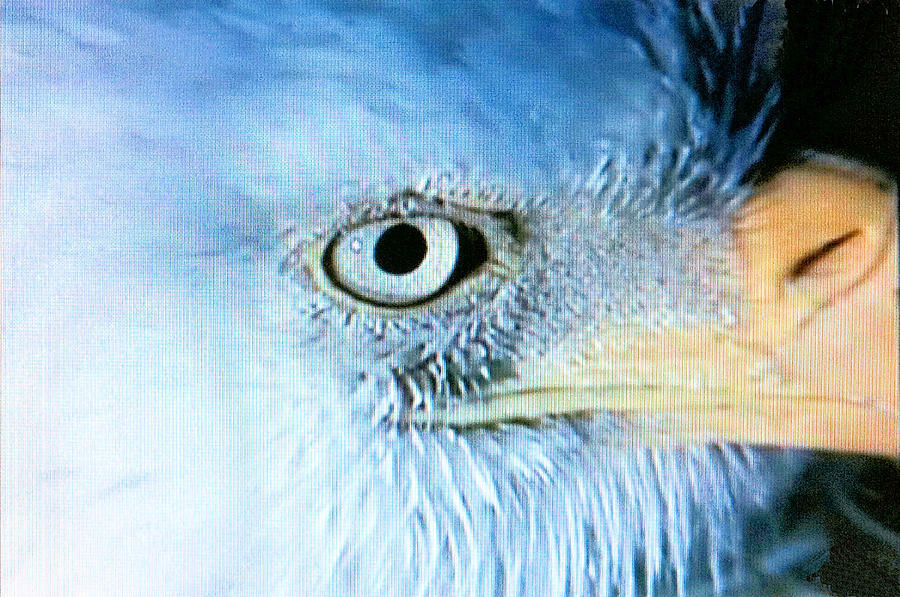 Bald Eagle Photograph - I See You by Beverly Johnson