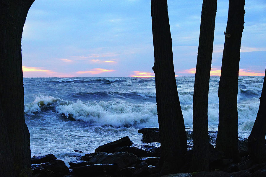 Lake Erie Photograph - Looking Through the Trees by Mike Murdock