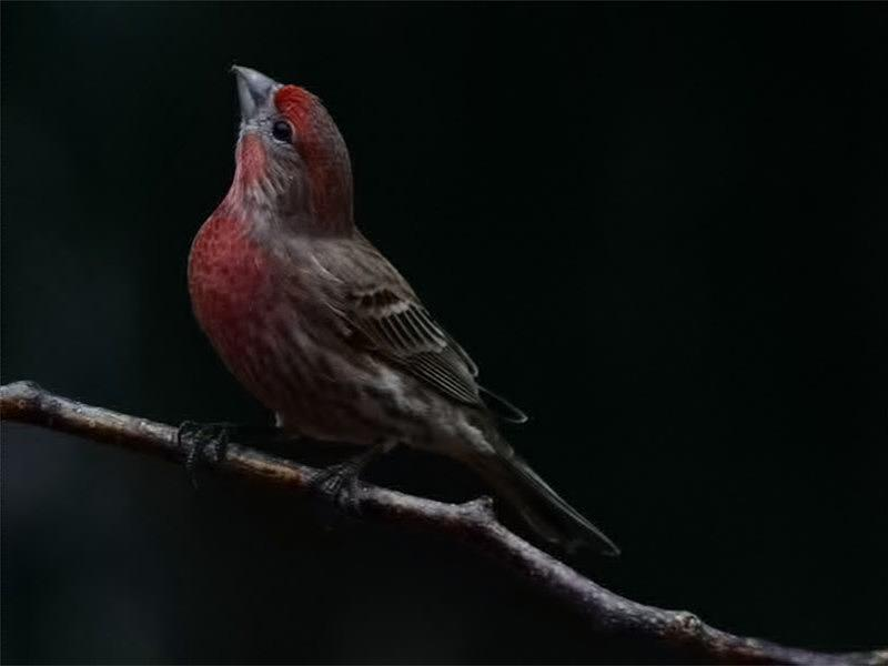 Finch Photograph - Looking towards heaven by Gaby Swanson