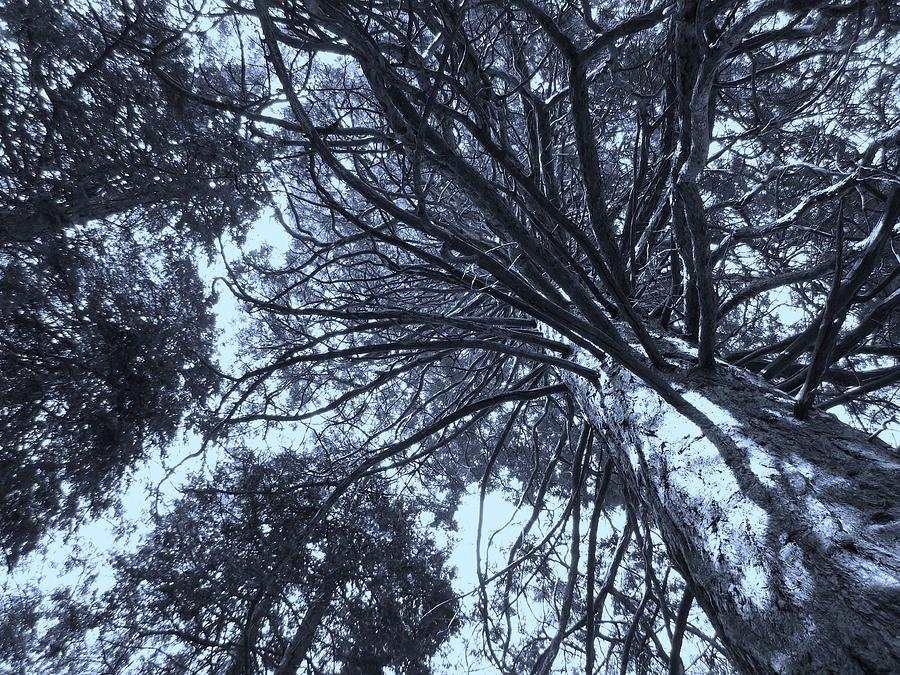 Branches Photograph - Looking Towards The Light by Heather L Wright