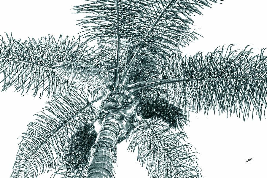 Palm Photograph - Looking Up At Palm Tree Green by Ben and Raisa Gertsberg