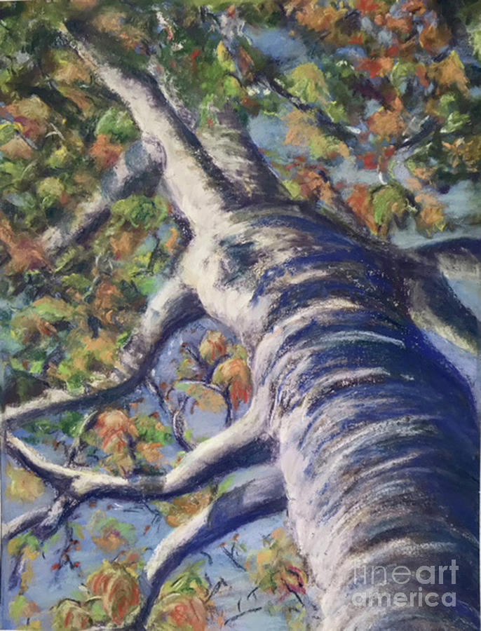 Looking Up - Fall by Susan Sarabasha