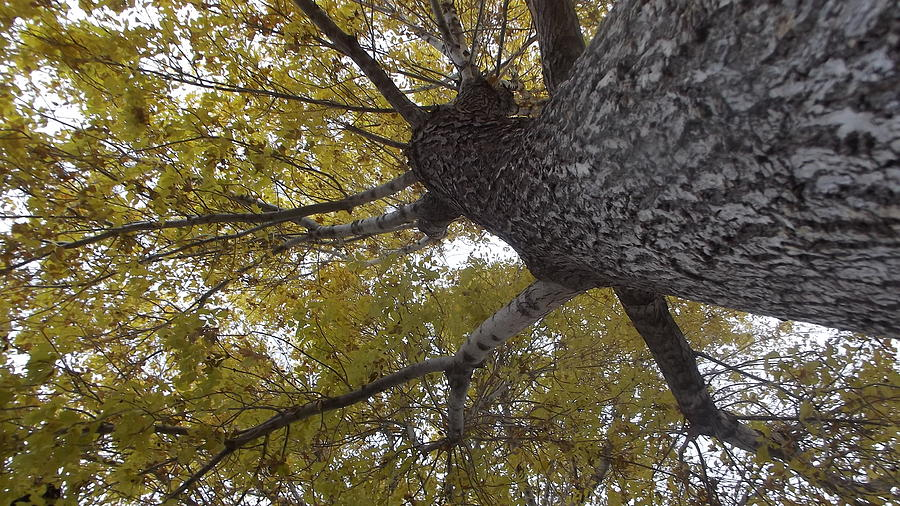 Looking Up Photograph