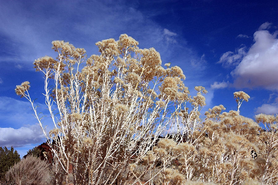 Landscape Photograph - Looking Up  by Mary Haber