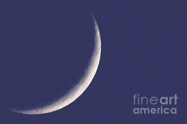 Moon Photograph - Looking Up by Stephanie  Varner