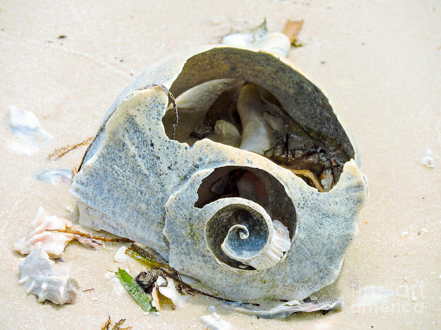 Shell Photograph - Looking Within by Marilee Noland