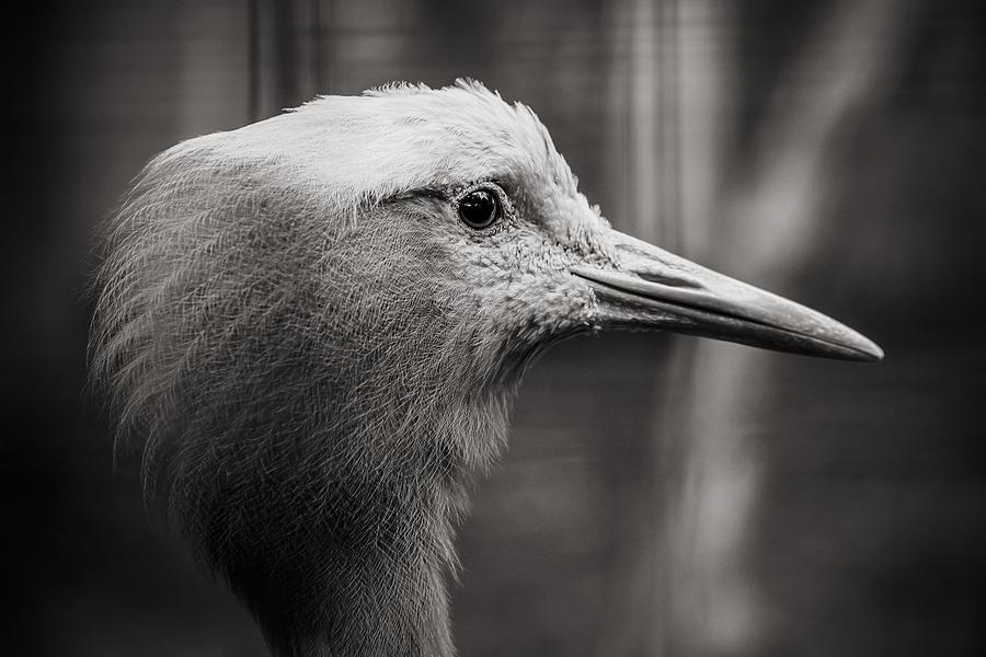 Bird Photograph - Lookout by Angela Aird