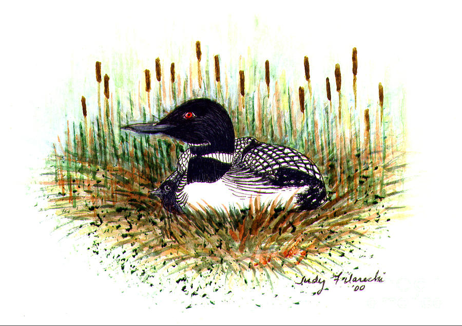 Loon Painting - Loon and Baby Judy Filarecki Watercolor by Judy Filarecki