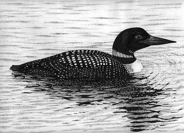 loon drawing by rens ink