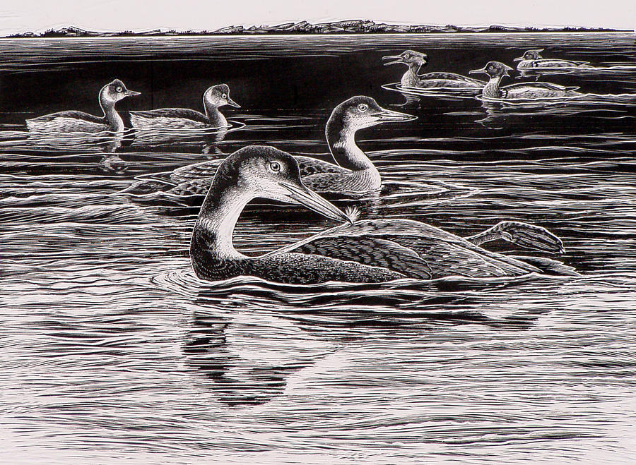 Loon Drawing - Loons Grebes And Mergansers by Shari Erickson