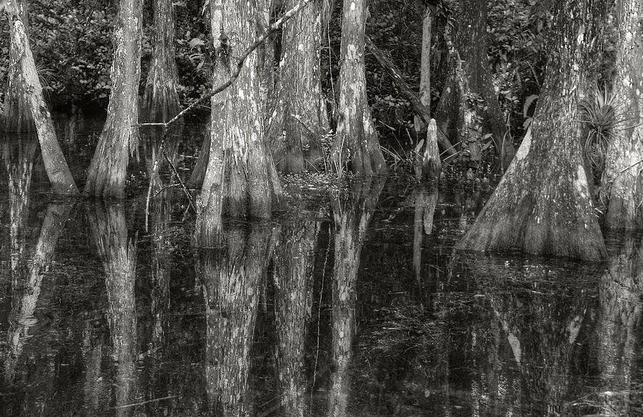 Loop Road Swamp #5 by Michael Kirk