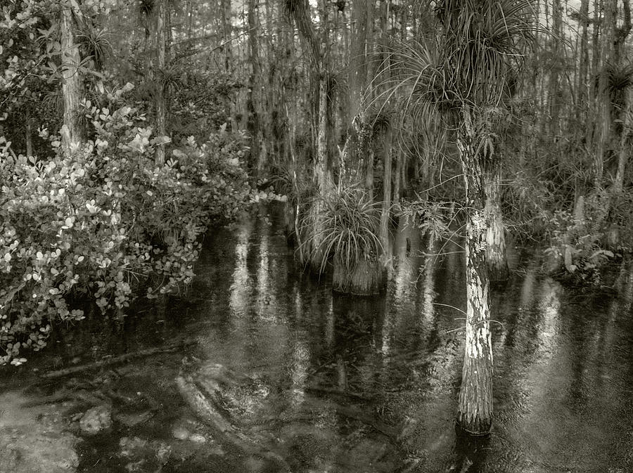 Loop Road Swamp #1 by Michael Kirk