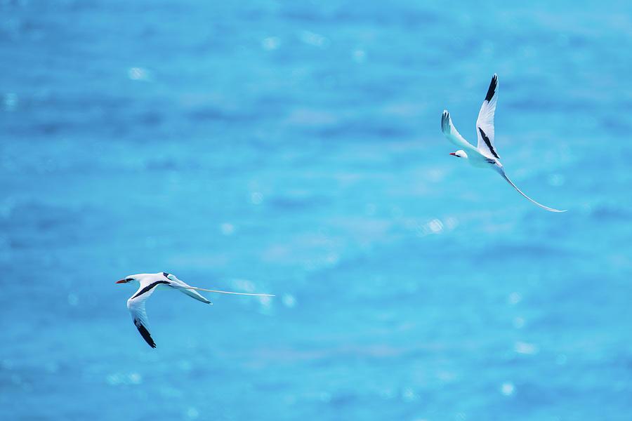 Loose Formation Flight by Jeff at JSJ Photography