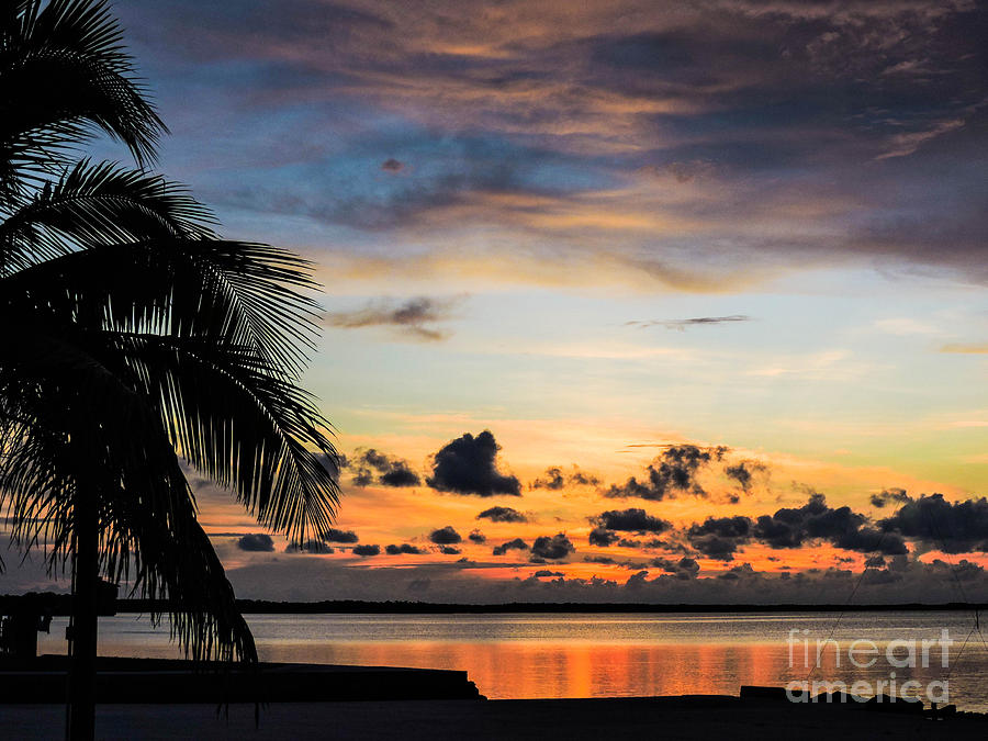 Palm Photograph - Lopez Point Skyline by Marilee Noland