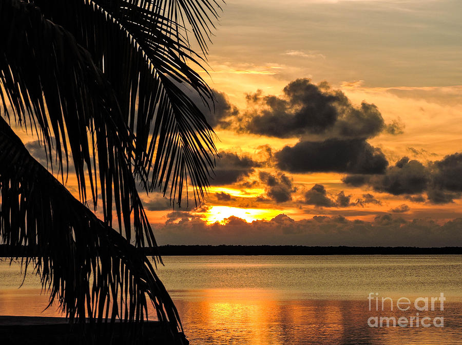 Palm Photograph - Lopez Point Sunset by Marilee Noland