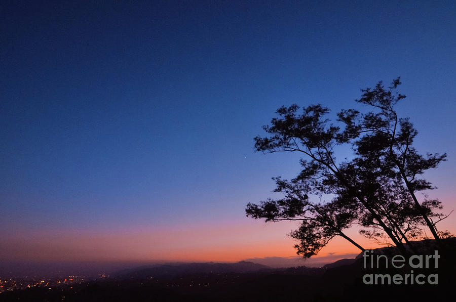 Trees Photograph - Los Angeles At Night by Brooke Meislik