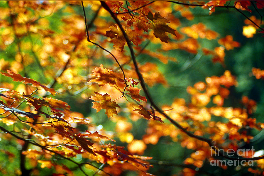 Fall Color Photograph - Lost In Leaves by Kathy McClure