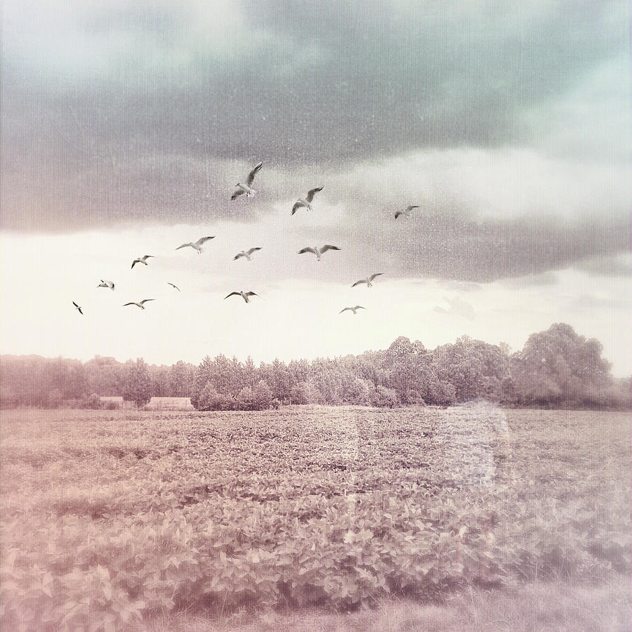lost in the fields of time by Melissa D Johnston